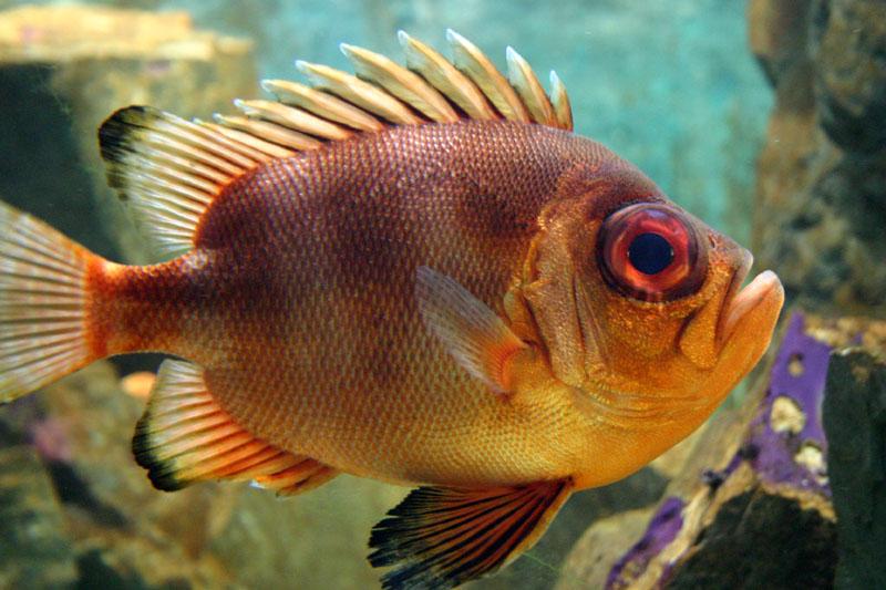 20080626225244_tropical_fish